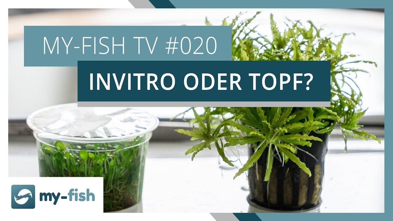 my-fish TV - Deine Nr. 1 Anlaufstelle für alle Themen rund um die Aquaristik 44