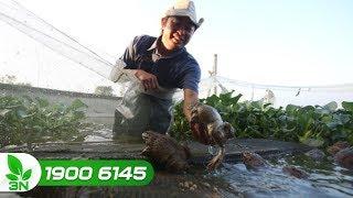 Thủy sản | Cách xử lý khi nguồn nước ao nuôi ếch bị ô nhiễm