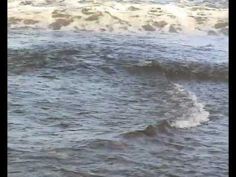 видео ловля динозавров в охотском море