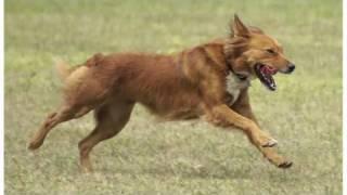 Understanding Dog Breeds: Mutt