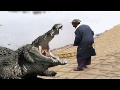 CROCODILE FEEDER EATEN BY CROCODILES