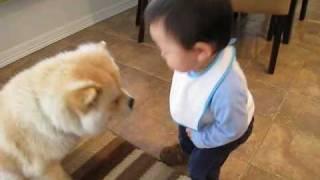 Video Baby making interesting conversation with dog MP3, 3GP, MP4, WEBM, AVI, FLV Mei 2017