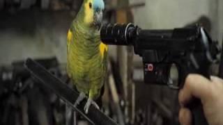 Nonton Wild Target   Parte 1  Legendado  Film Subtitle Indonesia Streaming Movie Download
