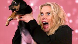 Video Kate McKinnon Plays With Puppies MP3, 3GP, MP4, WEBM, AVI, FLV Januari 2018