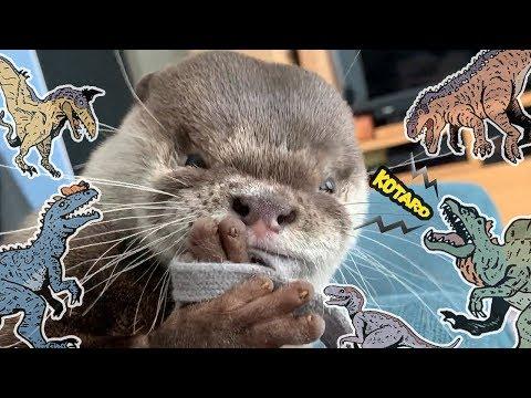 カワウソ コタロー ガジローになる! Kotaro the Otter Funny Face Biting