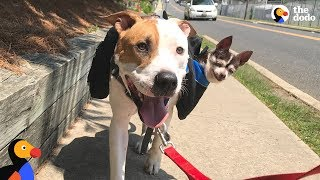 Rescue Dog Carries Senior Best Friend On Walks | The Dodo + Clear The Shelters by The Dodo