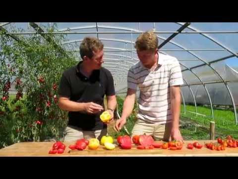 Tomates: quelles variétés choisir?
