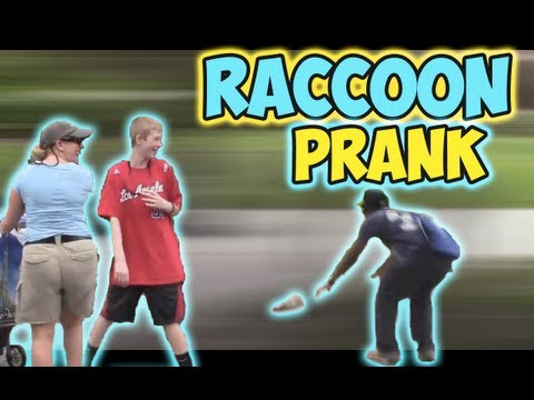 Raccoon Prank