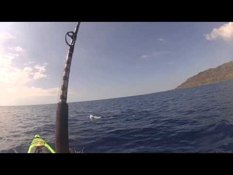 Shark says hi while Kayak Fishing - kayak fishing, kayak photos, kayak videos