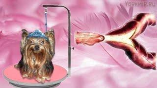 Как распознать и что делать при ложной, или мнимой, беременности у вашей собаки