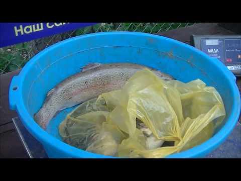 Видео отчет о рыбалке за 30 июня 2018