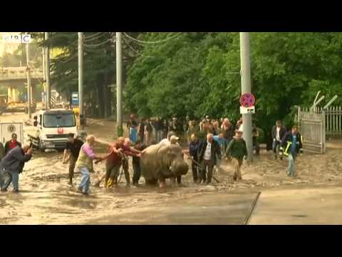 Georgia flood: Warning over escaped zoo animals, JUMANJI is real for sure