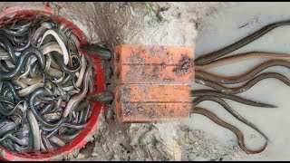 Hello Everyone! Greeting from Cambodia!Today i want to show you about: Brick With Plastic Basket Eel Trap To Catch A Lot of Eel By A Smart Girl And Boys in my village.If you enjoy this video click Thumb Up and Subscribe our CHANNEL for more videos;Follow me!Google Plus: https://goo.gl/7tltUZFacebook: https://www.facebook.com/7DDaily/Twitter: https://twitter.com/7ddailyPinterest: https://www.pinterest.com/7ddaily/Thank you for watching my video!