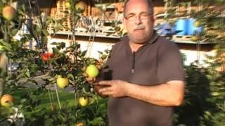 #229 Der gelbe Apfel Paradis Morgana
