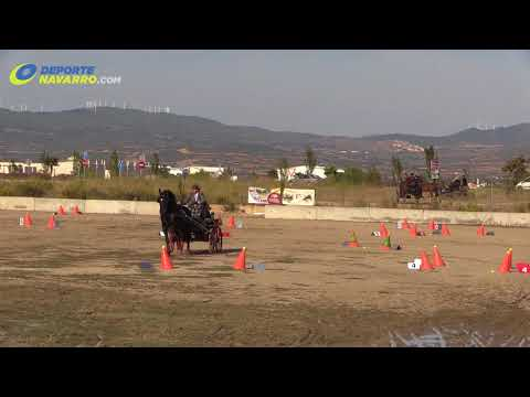 Campeonato navarro de enganches Olite 2017 6