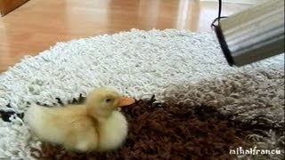 I Am Cute Duckling