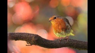 This little bird  - Marianne Faithfull (작은새-마리안느 훼이스풀) [가사,한글자막]