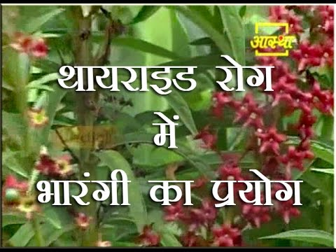 Use of Quassia in Thyroid| Acharya Balkrishna