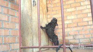 This Little Dog Has The Most Unusual Bark