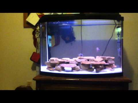 cichlid - Hey Guys, ==================================================== If I haven't subbed you, let me know and if I like your content well then consider yourself su...