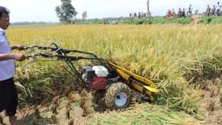 Reaper Harvesting in Bogra