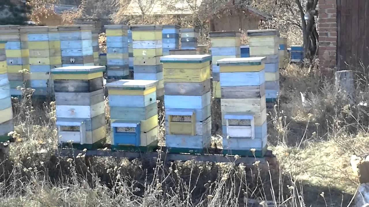 Пчеловодство. Смотреть онлайн: Пчеловодство.Улей Деллона и воскотопка