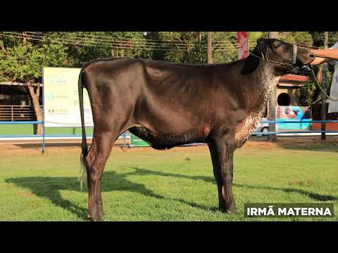 LOTE 10 - BANDEIRA REAL FIV BYWAY RON