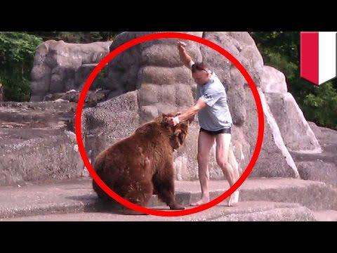 吸毒男子發瘋跳入大熊休息區遭撕咬手臂 接下來他做的事連熊都嚇呆了