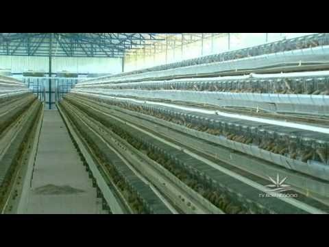 Agroexperiência - Granja de codornas