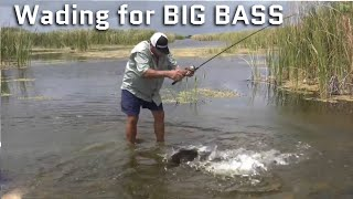 Video Wading in Ankle Deep Water for BIG BASS MP3, 3GP, MP4, WEBM, AVI, FLV Mei 2019