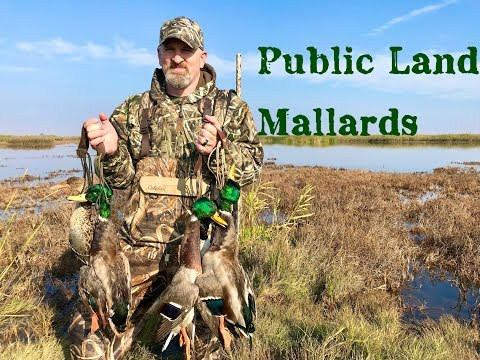 Duck Hunting - Public Land Grind