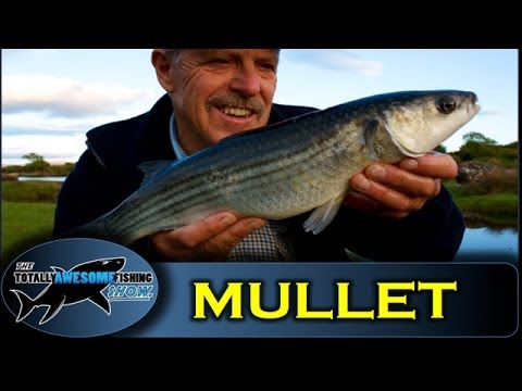 SHORE FISHING - How to catch creek Mullet gives you some of the basic tips you need to have any success with the