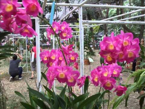 Thai Orchids Show紹介