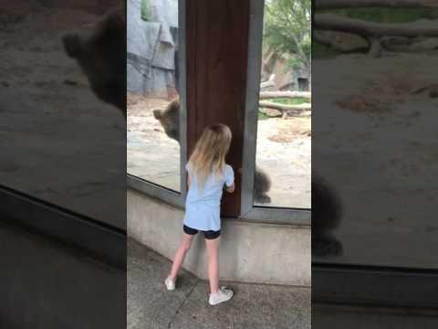 Mała dziewczynka bawi się w chowanego z niedźwiedziem