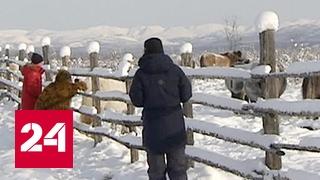 Полюс холода становится популярным туристическим местом