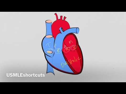 Best -Remember Heart Murmurs In Seconds