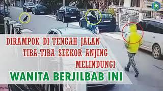 Video Dirampok di Tengah Jalan, Tiba-Tiba Seekor Anjing Melindungi Wanita Berjilbab Ini MP3, 3GP, MP4, WEBM, AVI, FLV Juni 2018