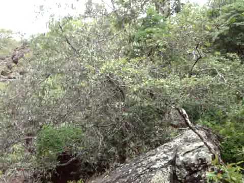 Cachoeira da Baixa Danta em Jacaraci/BA