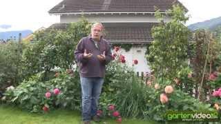 #1350 Pflanzbeispiele für Dahlien im gemischten Garten