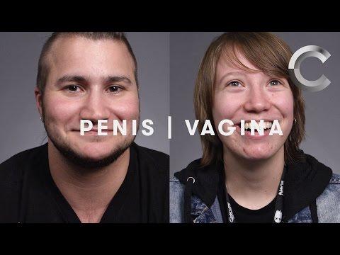 Penis & Vagina | Trans | One Word | Cut