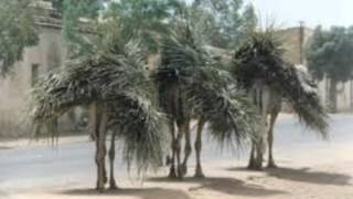 Eritrean Bilen Song 2015 Andom Tekie Ymoday