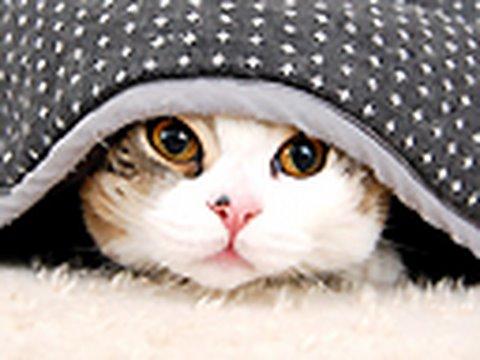 「こたつに入った猫ちゃん。」のイメージ
