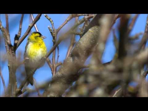 Video Kevadel (Juba linnukesed) download in MP3, 3GP, MP4, WEBM, AVI, FLV January 2017