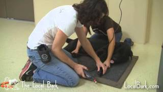How to Trim Your Dog's Nails with a Rotary Tool