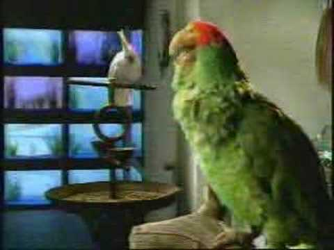 Budweiser SuperBowl Commercial Parrots