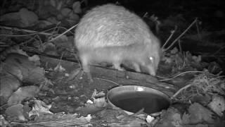 Wildlife Trail Camera - 10.12.2016