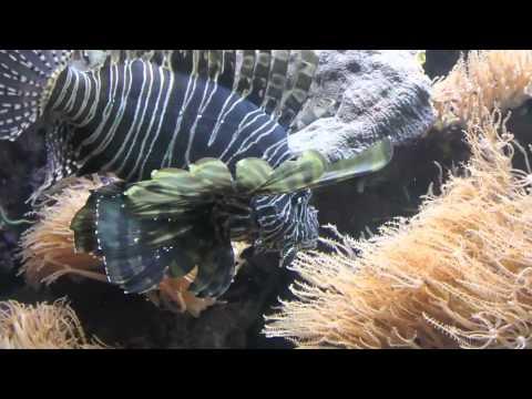 zootube - An adventure in the aquarium portion of the Omaha Zoo in Nebraska.