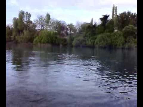 Salmón de 16,470 kgrs en un río de Chile