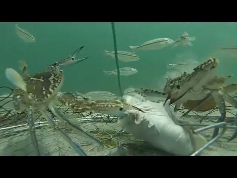 как мы ловили крабов