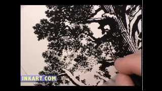 Scratchboard Drawing of General Grant Sequoia Tree